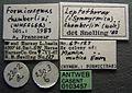 Formicoxenus chamberlini casent0103457 label 1.jpg