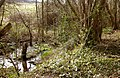 Forstbach-Quellbiotop.jpg
