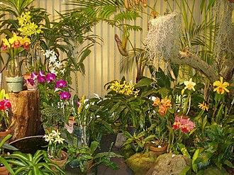 Foster Botanical Garden - Image: Foster Botanical Garden (orchid display) Honolulu, HI
