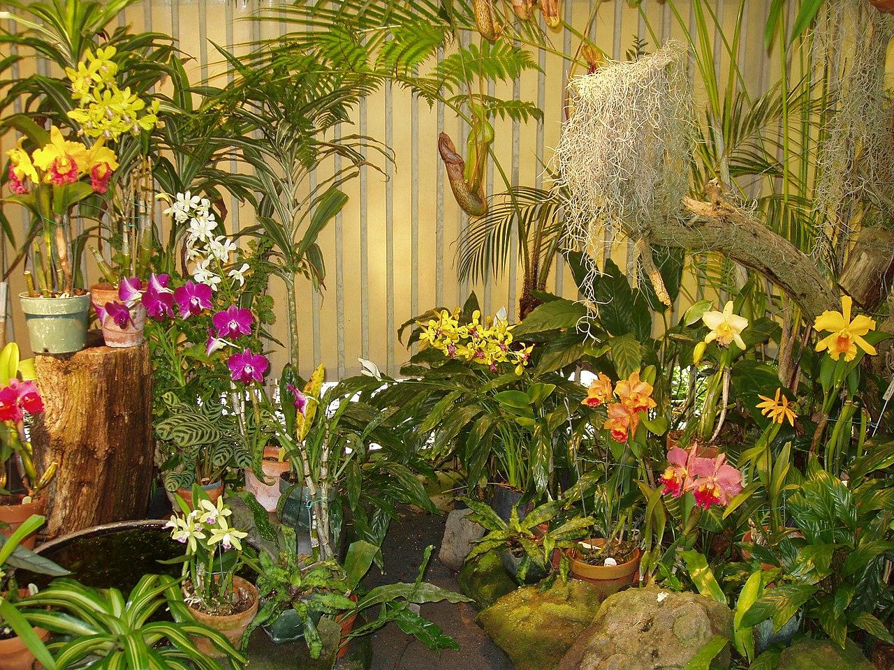 File foster botanical garden orchid display honolulu hi jpg wikipedia for Foster botanical garden honolulu