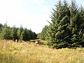 Foulbog Sike, Spadeadam Forest - geograph.org.uk - 241582.jpg