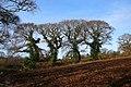 Four Trees (2182849615).jpg
