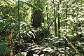 French Guiana (10.3897-zookeys.764.25108) Figure 34.jpg