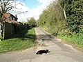 Friendly cat on path to Borough Hill - geograph.org.uk - 756386.jpg