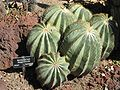 Gardenology.org-IMG 0397 hunt07mar.jpg