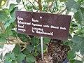 Gardenology.org-IMG 8068 qsbg11mar.jpg