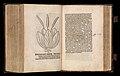 Gart der gesuntheit - Ortus sanitatis (Herbarius) MET DP358436.jpg