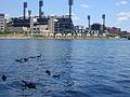 Geese + PNC Park (7516634414).jpg