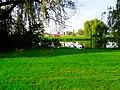 Geese - panoramio (4).jpg