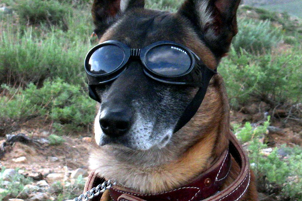 Search Service Dog Registry