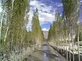 Ghwari Ghanche Baltistan.jpg