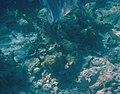 Glover's Reef 2-15 (33204807121).jpg