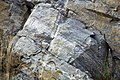 Gneiss (Precambrian; Harriman Reservoir roadcut, Route 9, southern Vermont, USA) 8.jpg