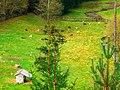 Goats - panoramio (4).jpg