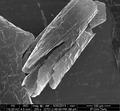 Grafeen-polüpürool kilele tehtud skalpelli terava otsage kraabe..tif