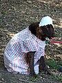 Granny dog (1701003585).jpg