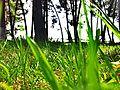 Grass beauty.jpg