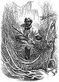 GreatDismalSwampMaroon1856.jpg