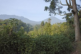 Gunung Gede Pangrango National Park - Flickr - Lip Kee (1).jpg