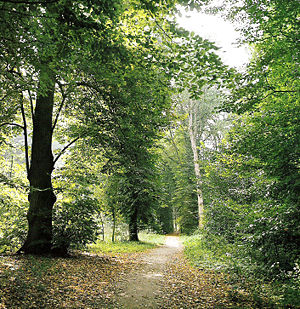 Haarlemmerhout - The Haarlemmerhout in Summer. It is said that Napoleon's soldiers carved their initials in these trees.