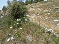 Hadassah Trail P1150481.JPG