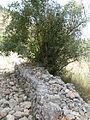 Hadassah Trail P1150500.JPG
