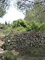 Hadassah Trail P1150549.JPG