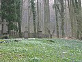 Halle (Westf.) - Kiskergrab.jpg