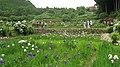 Hananosato-Takidani Japanese Iris Garden02.jpg