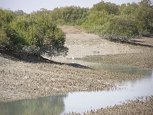 Mangrove forests of Qeshm - Hara Forests