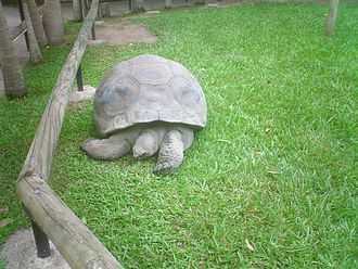 Australia Zoo - Harriet, the third oldest tortoise ever authenticated, lived at Australia Zoo