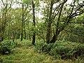 Hemplands Wood - geograph.org.uk - 948253.jpg
