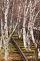 High Line, New York - 01.jpg