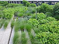 High Line, New York City (2014) - 21.JPG