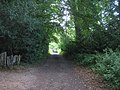 High Weald Paths on Woodlands - geograph.org.uk - 1409162.jpg