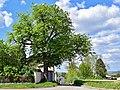 Hollabrunn - Kammersdorf - ND HL-052 - Linde - b.jpg