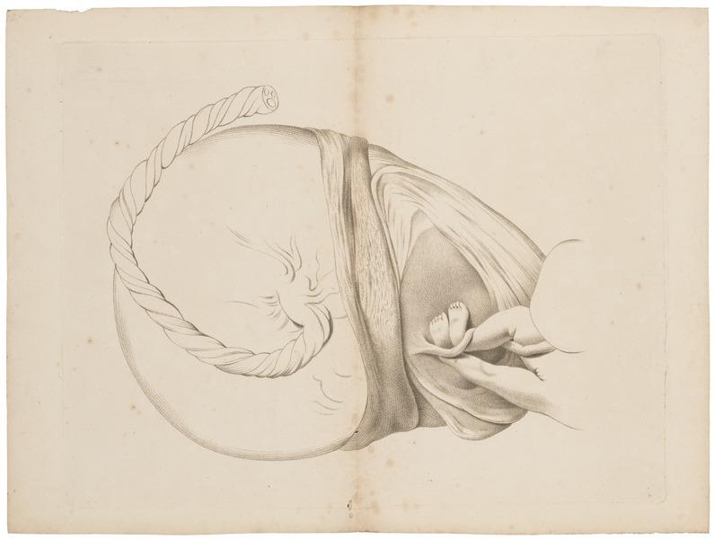 File:Homo sapiens - embryo - 1700-1880 - Print - Iconographia Zoologica - Special Collections University of Amsterdam - UBA01 IZ19600121.tif