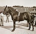 Horse, saddle Fortepan 92299.jpg