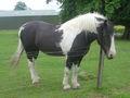 Horse dsc06503.jpg