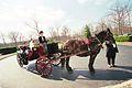 Horse wagon.jpg