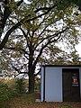 Hostavice, Farská, památný dub a trafostanice.jpg