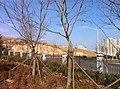 Huangdao, Qingdao, Shandong, China - panoramio (57).jpg