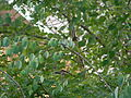 Hummingbird, Canada.jpg