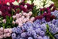 Hyacinths (4466601376).jpg