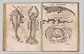 I) Herbarum, Arborum, Fructium, Frumentorum, c. 1540 ... II) De Speciali quarundam plantarum, Frankfurt- Egenolff 1552 MET DP327888.jpg
