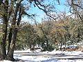 IFRANE-SNOW.jpg