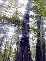 Ilisu State Reserve5.jpg