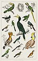 Illustration from A History of the Earth and Animated Nature by Oliver Goldsmith from rawpixel's own original edition of the publication 00096.jpg
