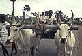 India-1970 064 hg.jpg