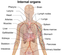 Organ (anatomy)